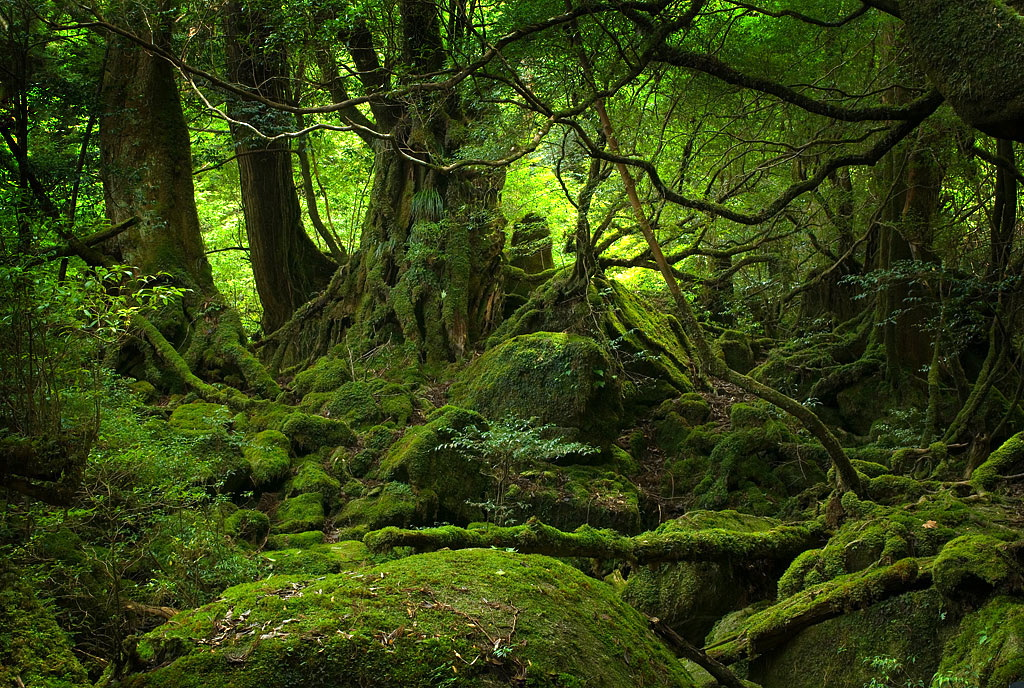 forests in Japan | Kanagawa Notebook