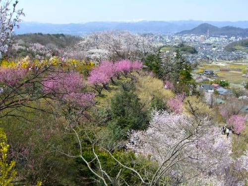 Fukushima's Watari district in the spring. Beautiful...but is it safe to life here?